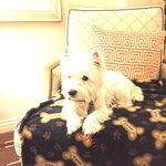 Charlie sitting on the blanket provided by the hotel