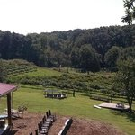 View of Vineyard from Treehouse