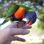 Friendly birds on our trip to Magnetic Island