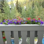 window box on living room balcony