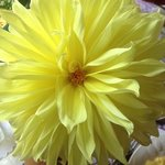Beautiful Dalia from Wolfgangs garden. Was a beautiful sight on the breakfest table