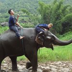 Photo of Ran-Tong Elephant Training - Day Tours