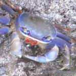 lovely crab