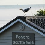 Foto di Pohara Beachfront Motel