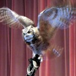 Raptor Show - Owl - Columbia Gorge Discovery Center - The Dalles, OR