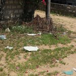 rubbish on the way to the beach august 2014