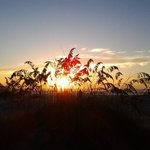 Sunrise from behind the grasses