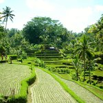 Bali Must Be Crazy - Tur Harian