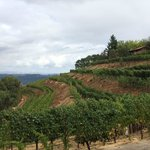 Vineyards are steep on Spring Mountain