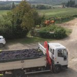 View from the window - collecting grapes
