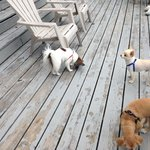 our three dogs on deck near water