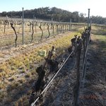 Kurrajong Vineyard Cottagesの写真