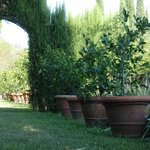 The oldest potted lemon grove in the world