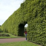 """For a sense of scale you can see my husband near the beech hedge...he is 5'10"""" tall"""