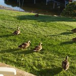 Ducks outside room 16!