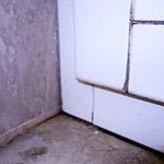 More mold in shower