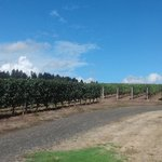 Newberg, Yamhill-Carlton - Dundee Hills AVA  of Oregon's Willamette Valley appellation