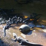 Everglades Rentals & Eco Adventures Foto
