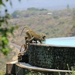 Foto de Lake Manyara Serena Lodge