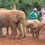 visiting hour at the Elephant Orphanage