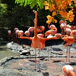 This flamingo was a total diva...