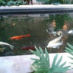 Koi pond beautiful