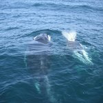 whales that came under the boat