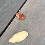 A cockroach on front porch.