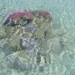 Small coral forms just off the beach with resident fish