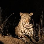 We loved watching this leopard