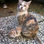 Lovely playful mother cat with her kittens !!