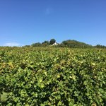 Foto de Stoneridge Vineyard Farm & Inn