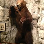Grizzly bear at Montana Historical Society in Helena, MT