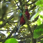 Our First Quetzal!