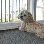Pet Friendly Rooms - Roxy approved