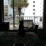 sadie enjoys her view from room 208