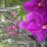 there is also an orchid garden