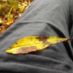 The leaf that fell on me