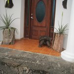 Front door--no it's not a real tortoise!