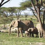 Baby Elephants Playing in Samburu