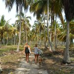 Palm tree walk to surf spot