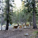 Photo of Tuolumne Meadows Campground
