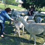 Foto de Starline Alpacas Farmstay Resort