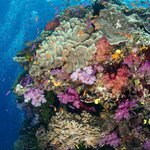 Best Coral Diving