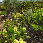 Wild flowers at Cape Naturaliste