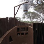 Photo of Oliver's Camp, Asilia Africa