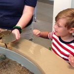 He loved seeing all the different crabs