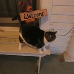 One of the Inn's several friendly cats