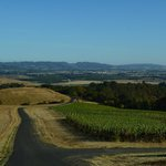Youngberg Hill Vineyards & Innの写真