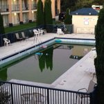 The pool is just a swamp